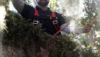 Certified Arborist Nathan Dubosh