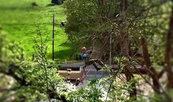 Arborist/Tree work for trade