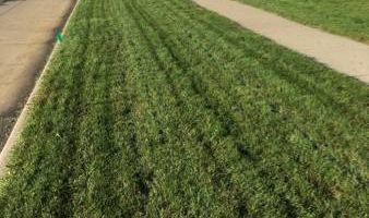 Latitude 41 Aerating and Overseeding