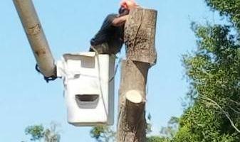 CARLOS TREE SERVICE