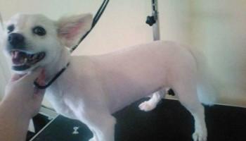 Natural dog grooming