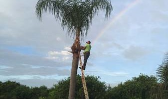 CANCUN LAWN AND TREE SERVICE