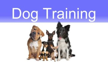 Animal Choice Puppy Boot Camp