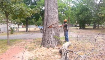 TREE REMOVAL PRUNNING TRIMMING PLANO ALLEN FRISCO