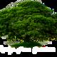 Rudy's Tree Service