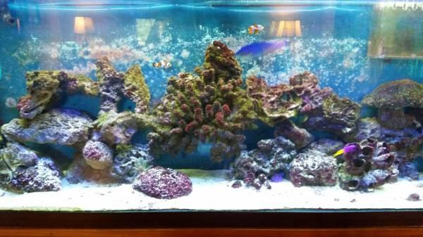 Aquarium Maint 25 Years Exper 904 651 1237