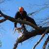 Arbortech Tree Service