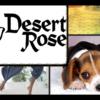 Desert Rose Carpet Cleaning