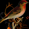 Robin's Nesting Service