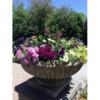 FloraScapes - Distinctive, Fine Garden Design and Care