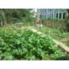 Green Shift Ecological Design Service