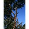 Trees, Trees, Trees! Borgers Tree Service