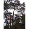 ROD'S TREE SERVICE - LICENSE # 679609
