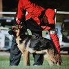 Brelsford's K9 Academy. Dog Training/Boarding