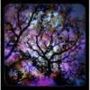 Adam Routh KC Pro Tree