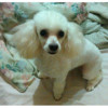 DISCOUNT DOG GROOMING! QUALITY BEAUTIFUL GROOMING 4 LESS!