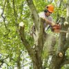 Lowe Tree Services - Tree trimming, removal, brush haul off, etc.