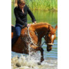 Equine Professional~Horse Training/Riding instructor