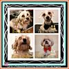 Pet Groomer at Home. Dog Walking Services