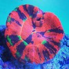 Whitlyn Aquatics LLC. Corals - Fish - Service