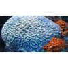 Intrinsic Reef Design