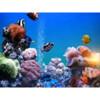 Bill Goody Aquariums - Best Aquarium Service & Maintenance in New York City!