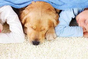 Photo #3: Carpet Clean Indy