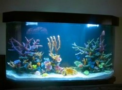 Photo #1: Aquarius Aquariums