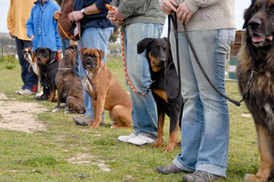 Photo #1: Dog School Austin