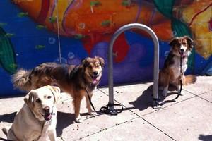Photo #3: Dog School Austin