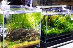 Photo #1: Aqua Forest Aquarium