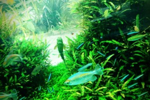 Photo #2: Aqua Forest Aquarium