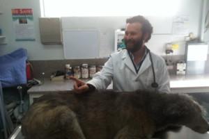 Photo #1: Balboa Veterinary Hospital