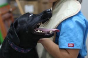 Photo #2: Balboa Veterinary Hospital