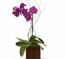 Photo #1: Crestwood Flowers