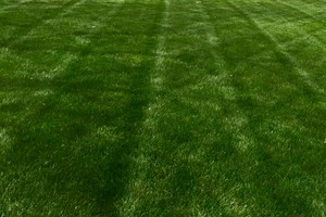 Photo #1: Livingston Lawns and Landscaping LLC