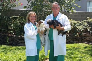 Photo #1: Campus Commons Pet Hospital