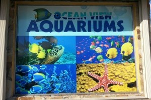 Photo #1: Ocean View Aquariums