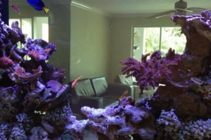 Photo #2: Ocean View Aquariums