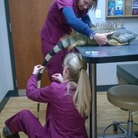 Photo #1: Pikes Peak Veterinary Clinic