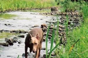 Photo #1: Capital Dog Training