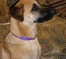 Photo #2: Capital Dog Training