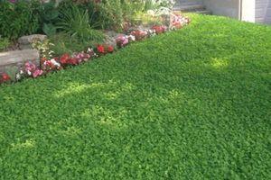 Photo #2: C & R Lawn Care Service
