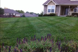 Photo #3: Johnson lawn and landscape