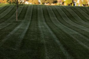 Photo #1: Platinum lawn and landscape