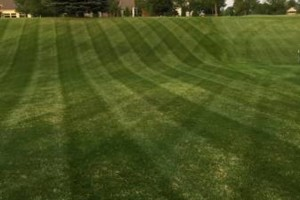 Photo #2: Platinum lawn and landscape