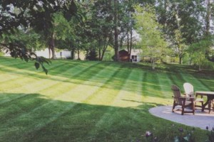 Photo #4: Platinum lawn and landscape
