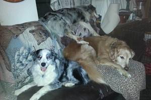 Photo #1: Dana's Pet Sitting