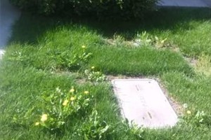 Photo #2: Steven's Gardening Service