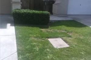 Photo #3: Steven's Gardening Service